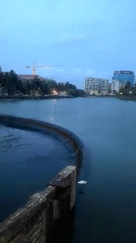 可倫坡的兩隻crane, crane在英文當中指的是起重鐵架, 也指鶴(這裡其實是鷺鷥)