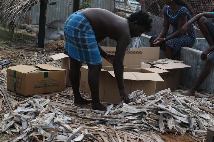除了戰後於Kirinochchi建的工廠, Jaffna半島現今仍無任何工業可言, 豐富漁產一律曬乾後運往可倫坡