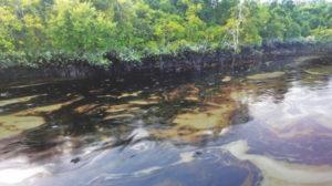 sundarbans oil seepage