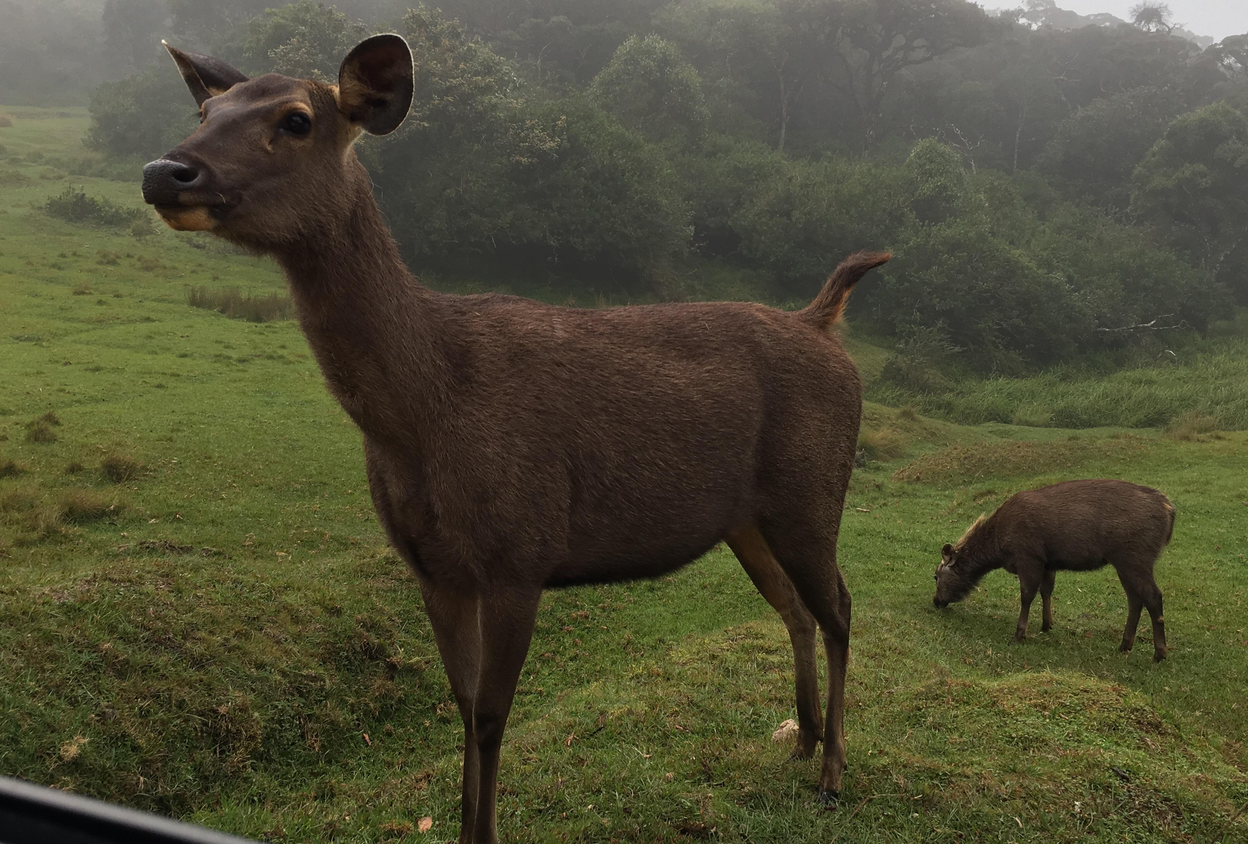 從霍頓平原到墾丁國家公園,台灣與世界自然遺產的差距
