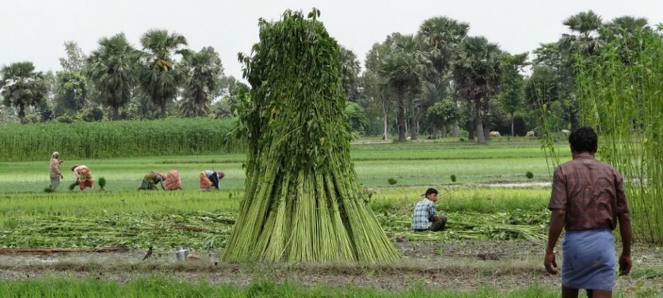Environmental Policy and Jute Bags 孟加拉的時尚環保vs.塑膠王國台灣