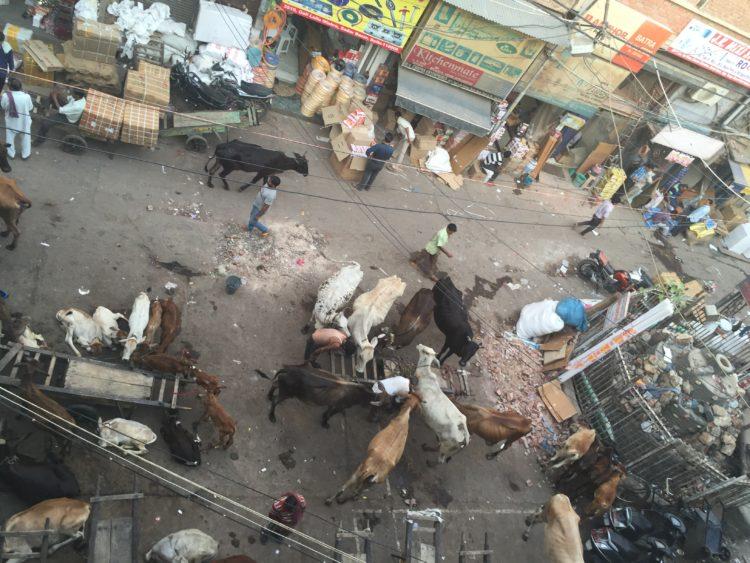 old delhi_04